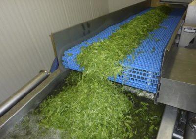 Salladstransport till tvättning.